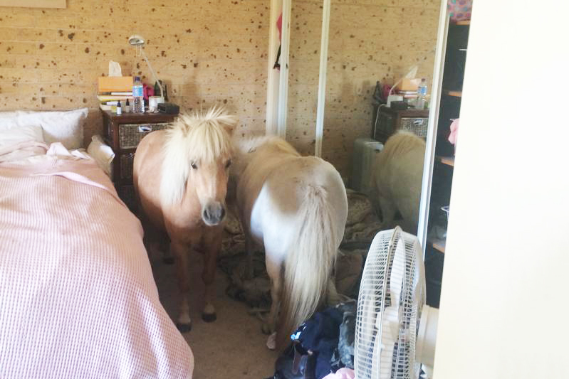 Naughty Ponies In The Bedroom