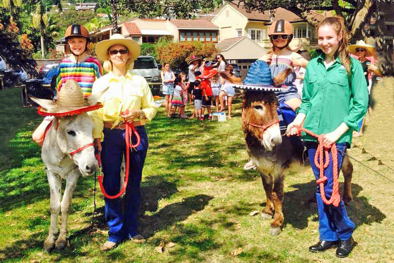 Our Donkeys Dressed For A Mexican Theme