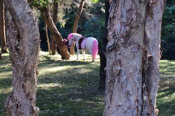 Pony In The Forest
