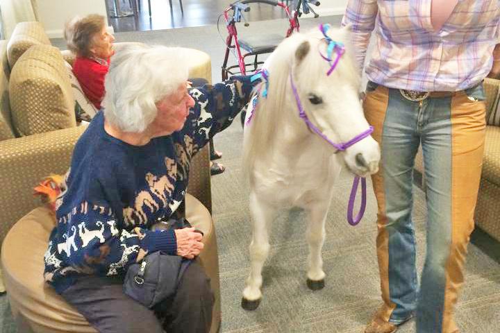 Pony Visiting The Nursing Home
