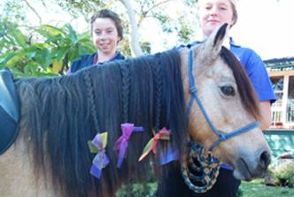 Buckskin Pony With Ribbons In Mane