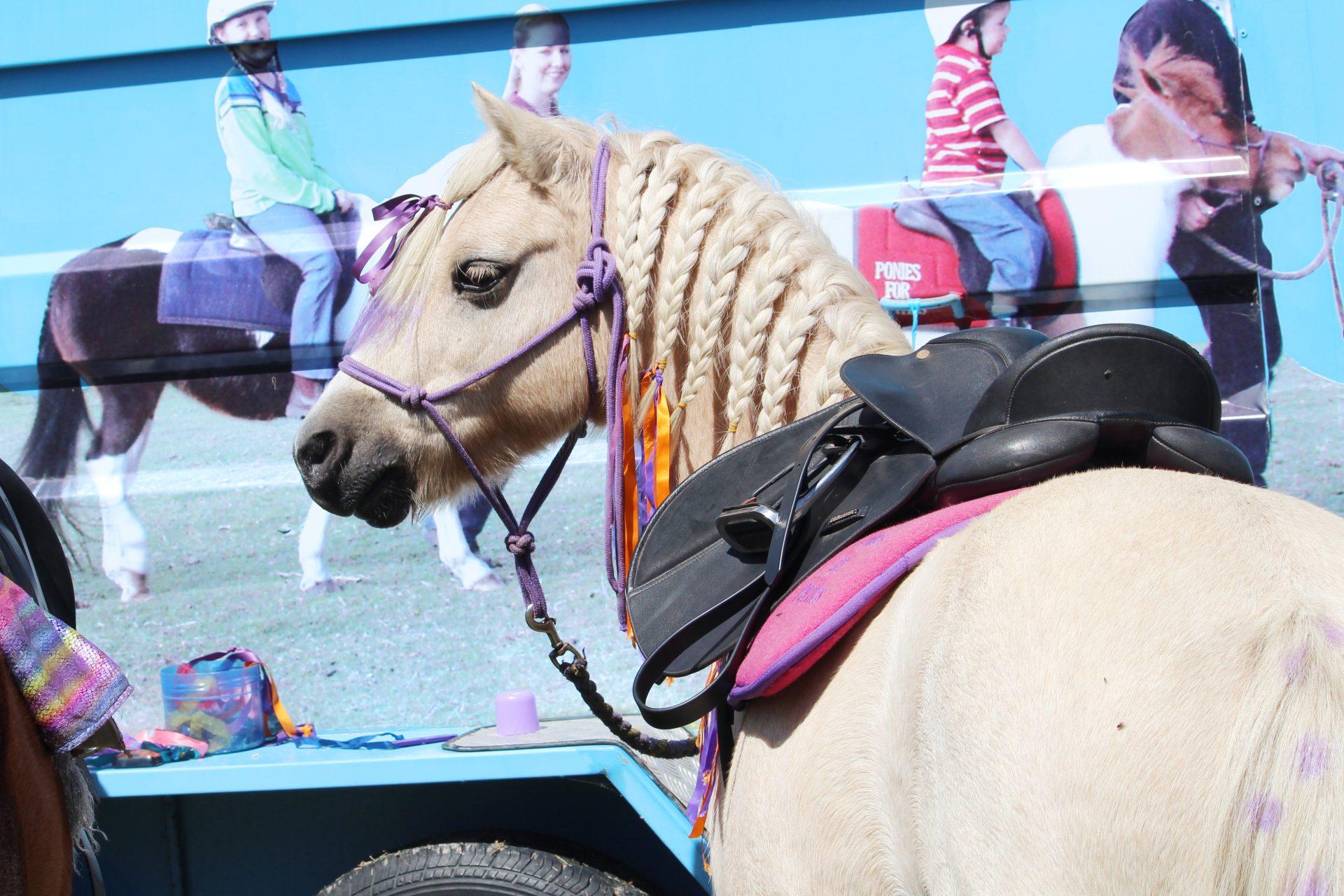 Palamino Pony With Braided Mane And Ribbons