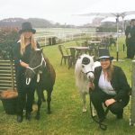 Ponies At The Melbourne Cup