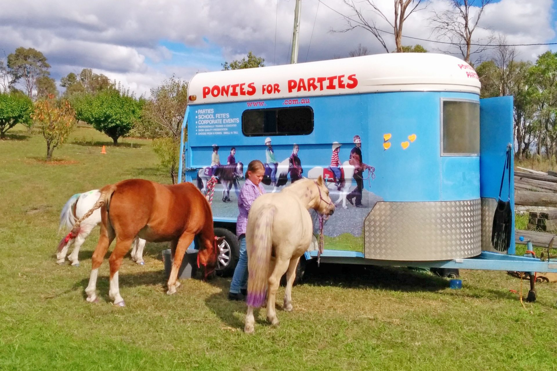 Ponies Getting Ready By The Trailer