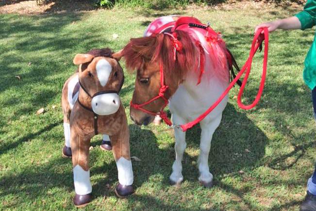 Real Pony Toy Pony